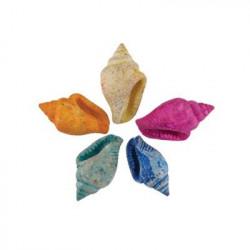 Nassa Dyed Asstd, ракушки декоративные 100гр,0.25-0.5 дюйма. Zlatka