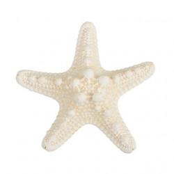 Белый, декоративная морская звезда, 7-10см. Zlatka