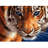 Голубоглазый тигр, раскраска по номерам на холсте 30х40см 21цв Планета Картин