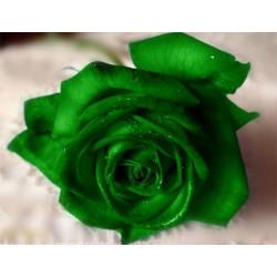Зеленый, синтетический краситель пищевой концентрированный 15 мл