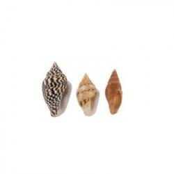 Nassa, ракушки декоративные 100гр,0.25-0.5 дюйма. Zlatka