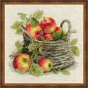 Спелые яблоки, набор для вышивания крестиком 30х30см нитки шерсть Safil 23цвета Риолис