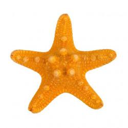 Оранжевый, декоративная морская звезда, 7-10см. Zlatka