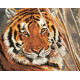 Тигр, набор для вышивания крестиком 35х28см 19цветов Алиса