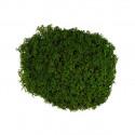 Зеленый, мох стабилизированный окрашенный, 50г. Blumentag