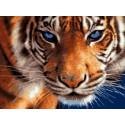 Голубоглазый тигр, картина по номерам на холсте 30х40см 21цв Original