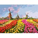 Разноцветное поле тюльпанов, картина по номерам на холсте 30х40см 18цв Original