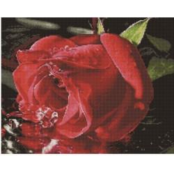 Отражение розы, алмазная мозаика на подрамнике 40х50см 25цв полная выкладка PO