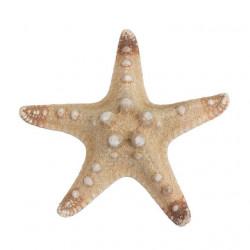 Натуральный, декоративная морская звезда, 7-10см. Zlatka