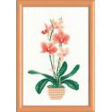 Желтая орхидея, набор для вышивания крестиком 21х30см мулине хлопок Anchor 12цветов Риолис