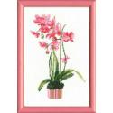 Розовая орхидея, набор для вышивания крестиком 21х30см мулине хлопок Anchor 11цветов Риолис