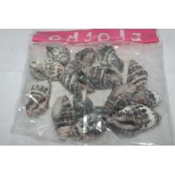 Натуральный, ракушки декоративные 1.5x3.5 см, 20 гр. Zlatka